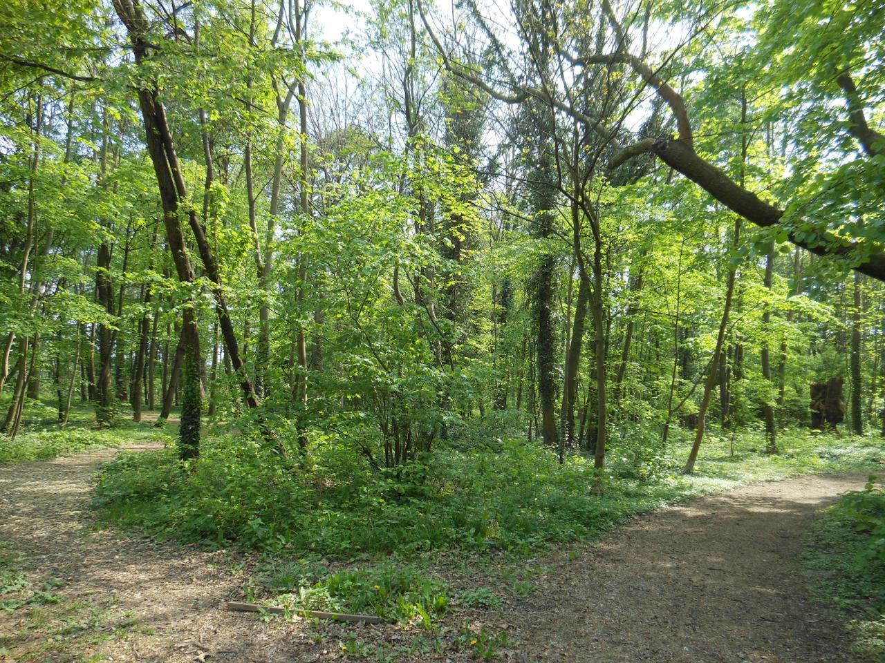 Bois du Kupferhammer